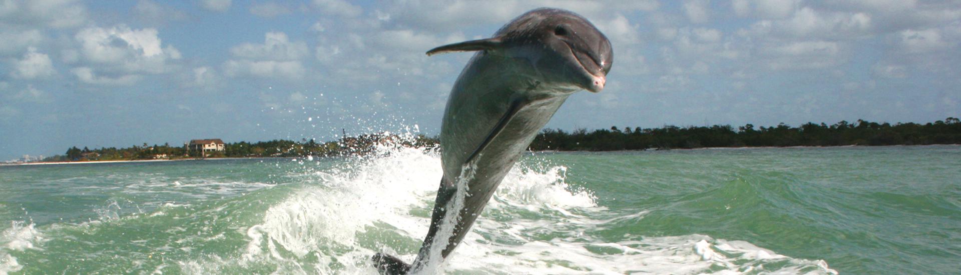 dolphin jump 550